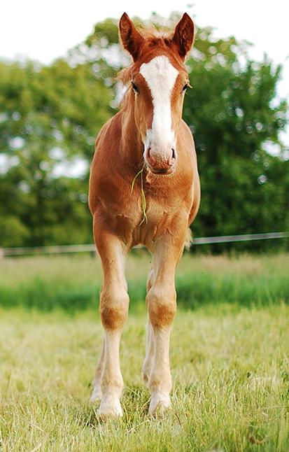 Traumatherapie bei Pferden