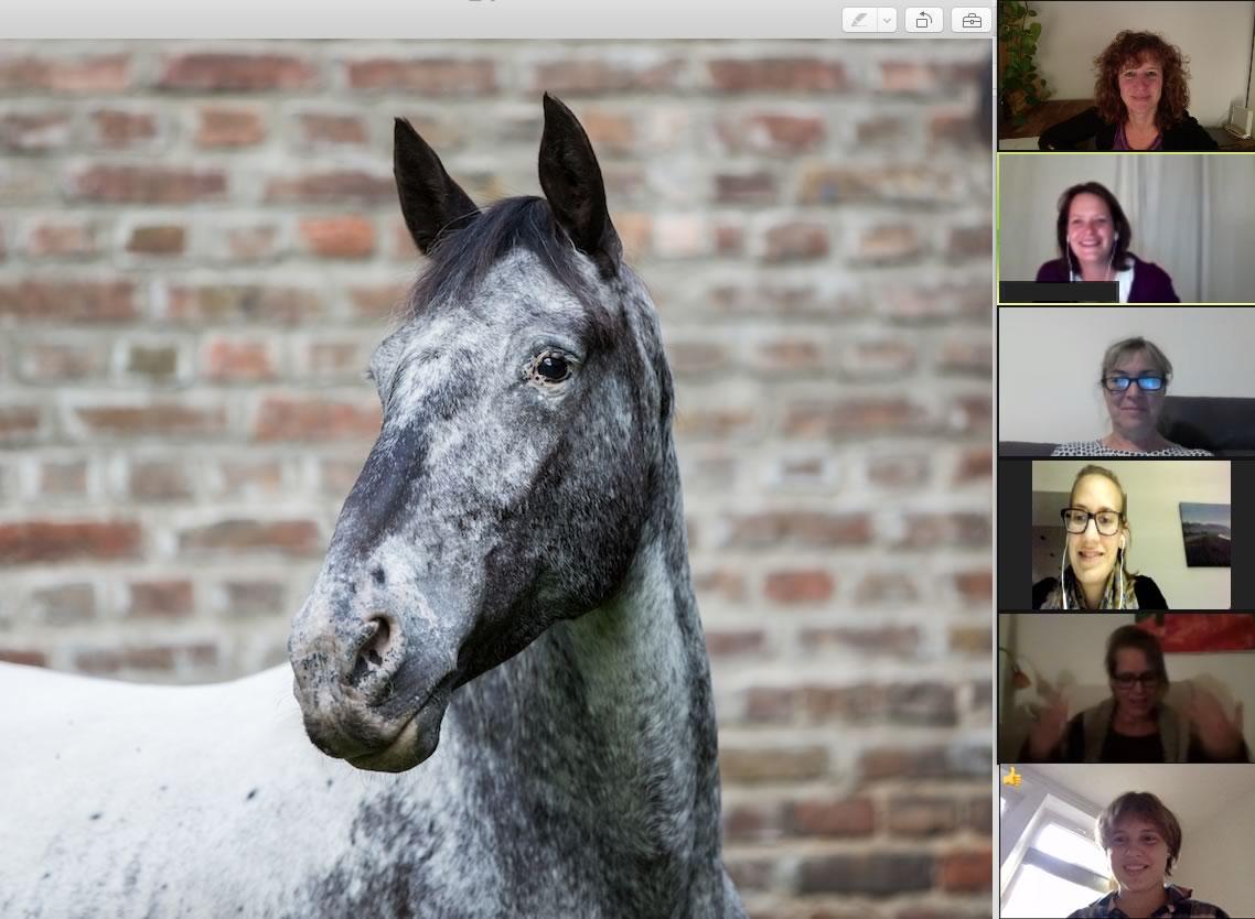 Onlinekurs Tierkommunikation